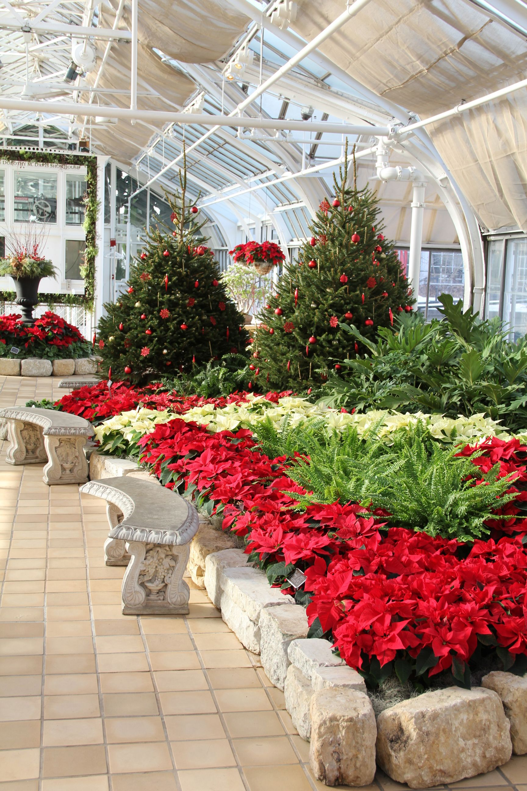 Holiday Displays Of Poinsettias And Evergreens Merry Bright At
