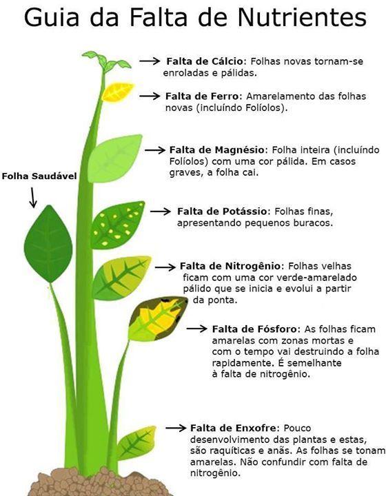 Guia de falta de nutrientes nas plantas.