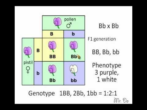 punnett square   Genetics   Science curriculum, Teaching ...