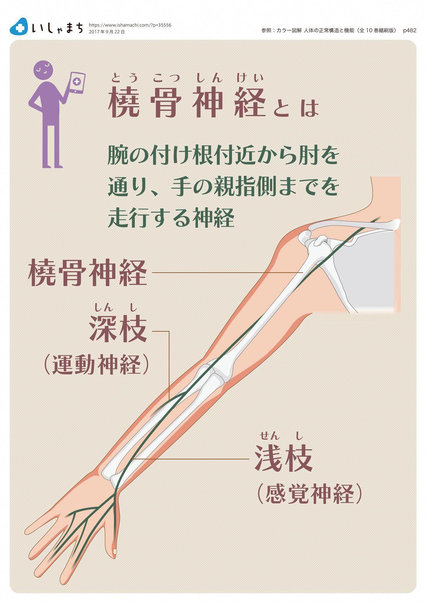 橈骨神経とは infographics massagebenefits Massage for men