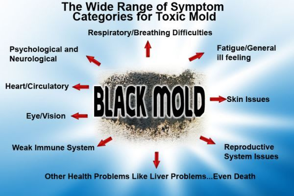 The Best Black Mold Illness Treatments Yahoo Search Results