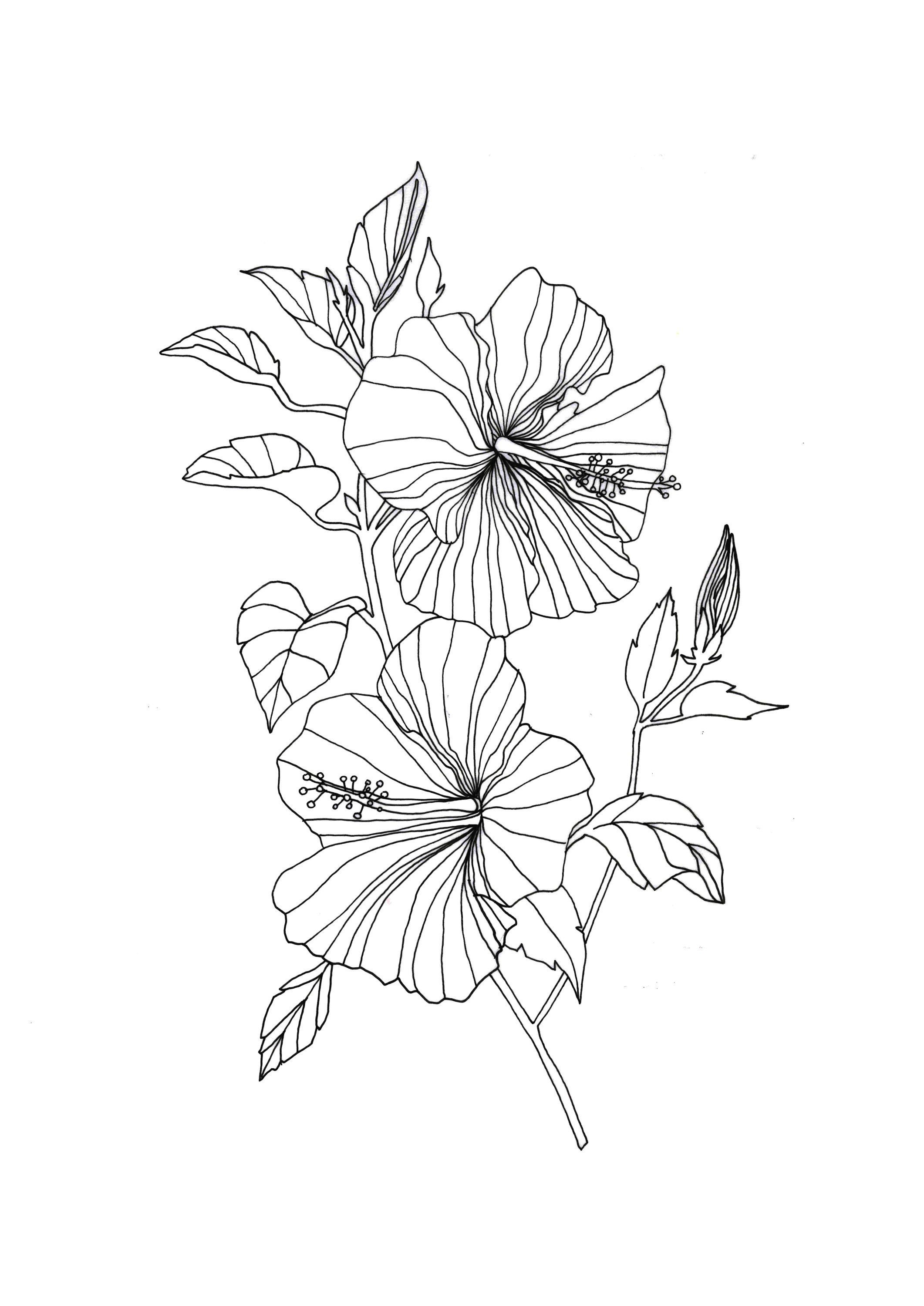 Drawing Flowers Mandala In Ink Flower Line Drawings Hibiscus