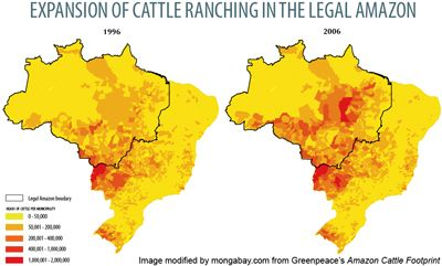 Beef Drives 80 Of Amazon Deforestation Cattle Ranching