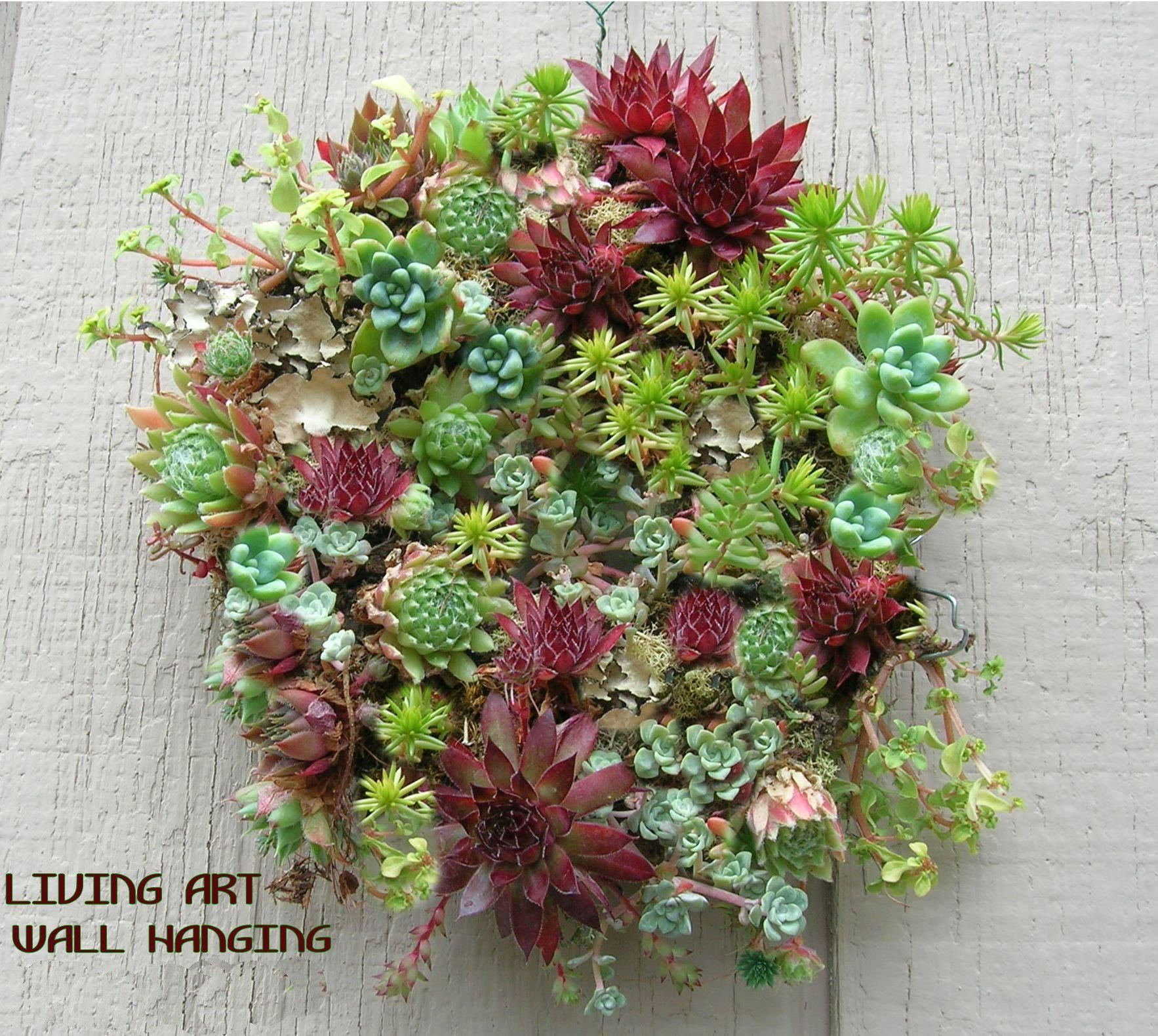 Living Art ~My passion! | Vertical succulent gardens ... on My Garden Outdoor Living id=25727