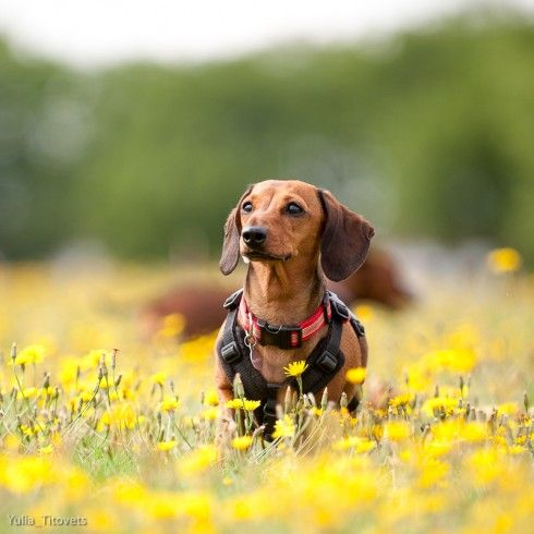 North London Based Pet Photography From Four Little Paws By Yulia