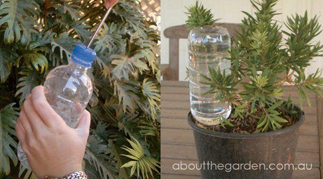 38+ Como regar las plantas inspirations