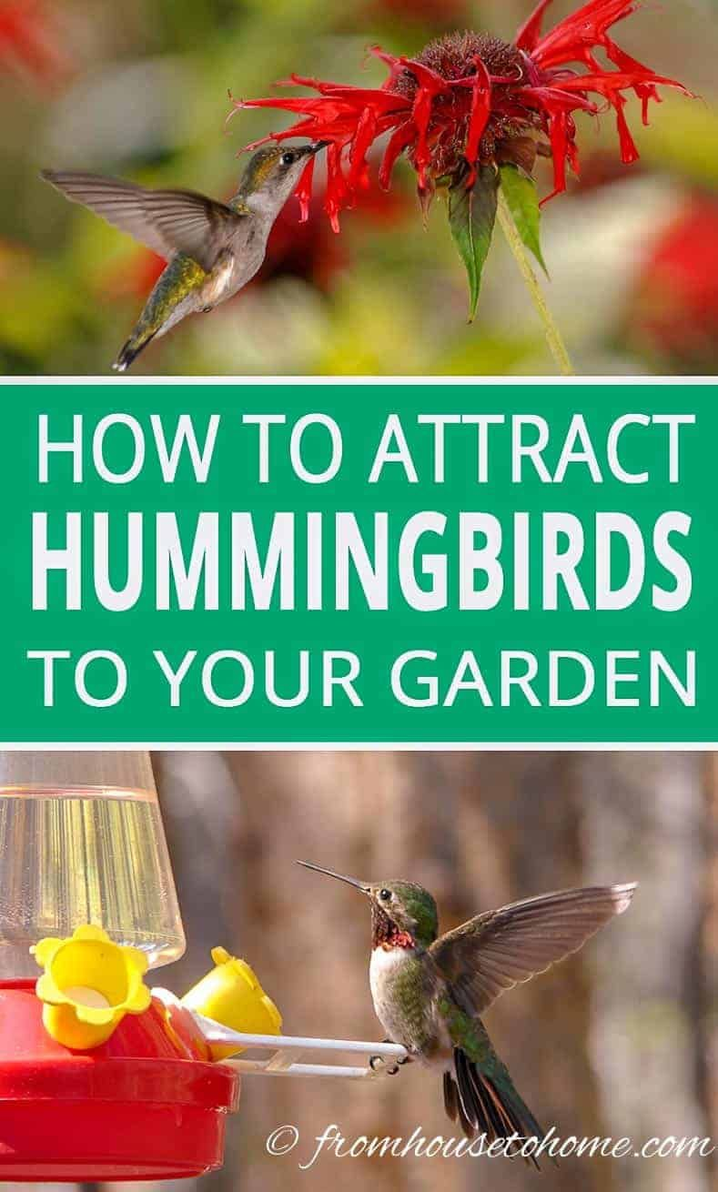 how to attract hummingbirds to your garden   wild bird and
