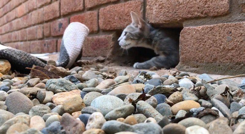 'Superhero' Handyman Frees Kitten Trapped in Brick Wall