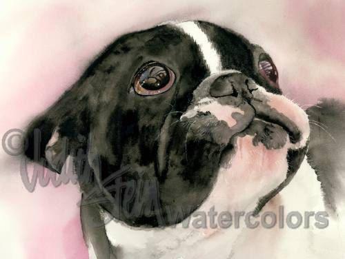 Franzosische Bulldogge Akc Nicht Sportlichen Pied Schwarz Weiss Haustier Portrait Hund Art Giclee Aquarellzeichnung Print Wandkunst Dekoration Wer Ich Haustierfotos Bulldogge Hunde Gemalde