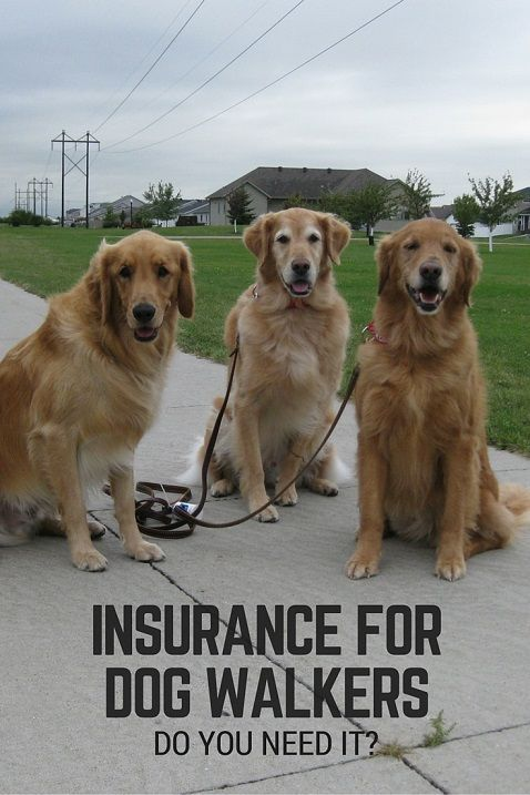 Insurance For Pet Sitters And Dog Walkers Dog Walking Business