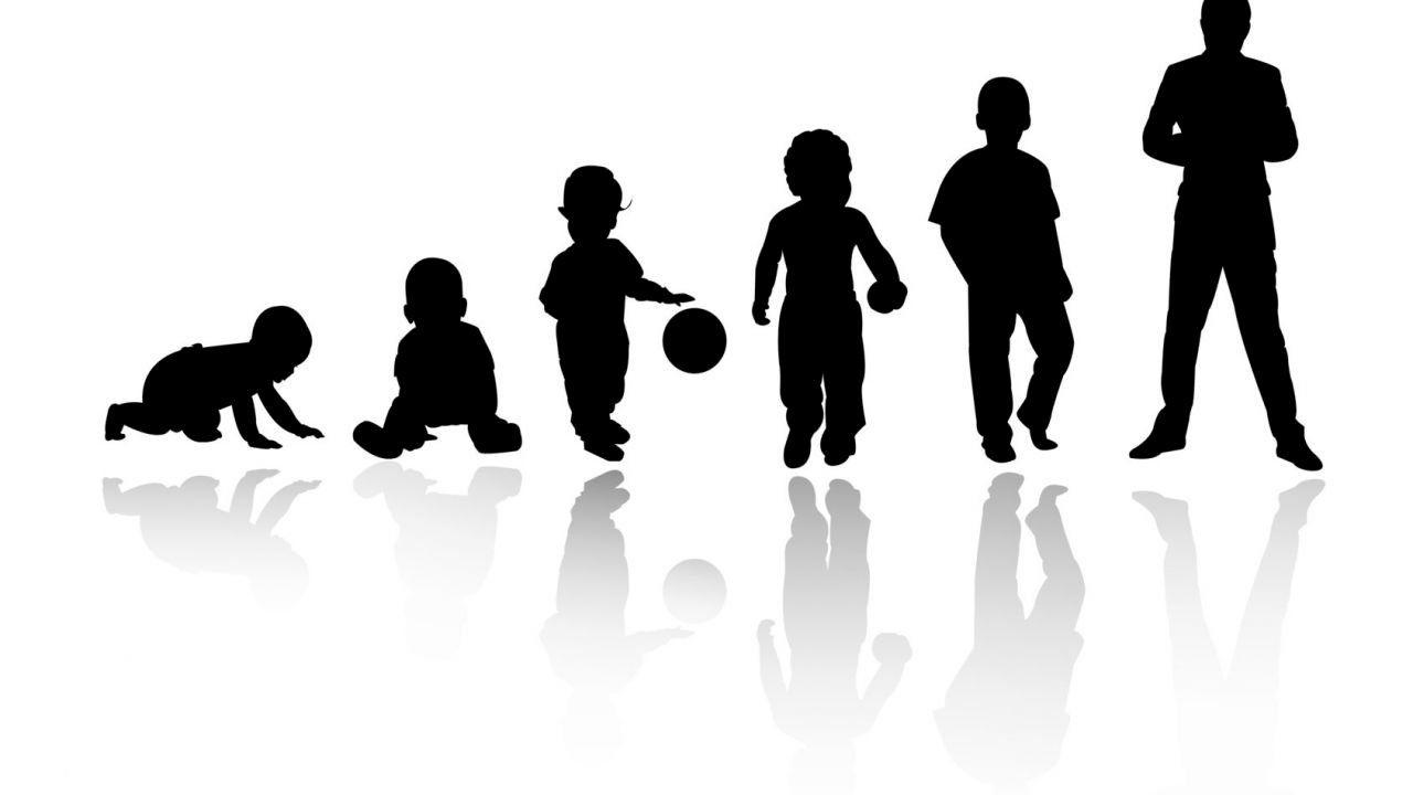 مراحل النمو عند الإنسان Human Silhouette Silhouette Human