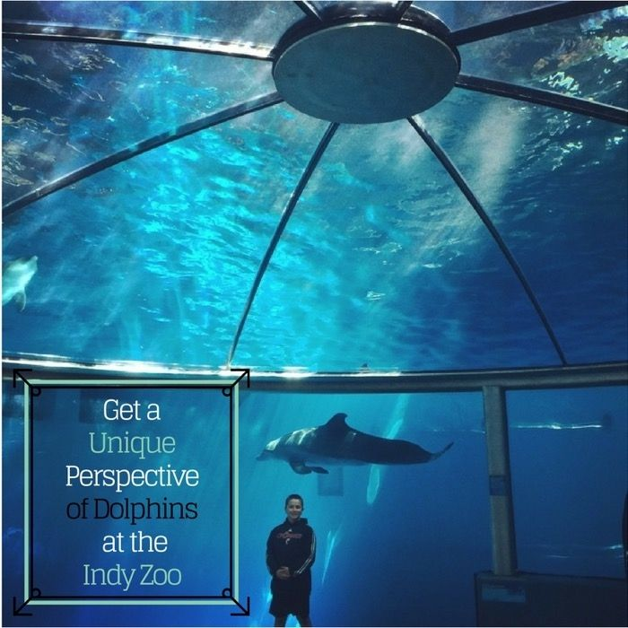 Get A Unique Perspective Of Dolphins At The Indy Zoo Adventure Mom Indianapolis Zoo Adventure Mom Zoo Adventure
