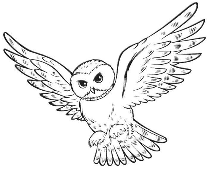 Hedwig | HP coloring pages | Pinterest