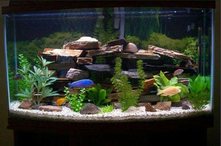 Love The Rockscaping Fresh Water Fish Tank Fish Tank