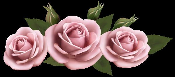 Beautiful Transparent Pink Roses Png Picture Flores Pintadas