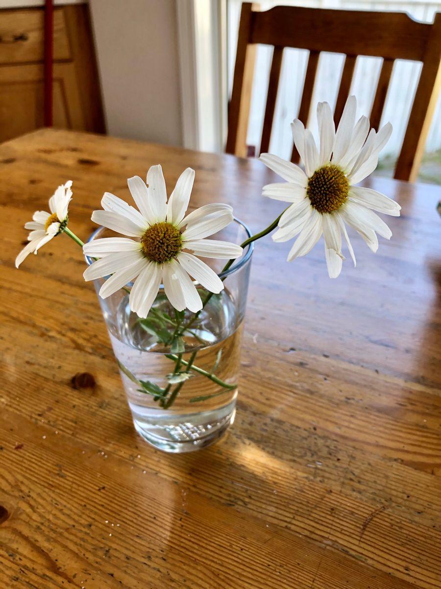 #simpledecor #daisy #flowers #flower
