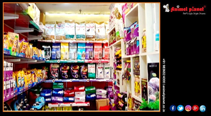 Animel Planet Is Recognized As The No1 Online Pet Store In Kolkata Haldia Siliguri For Delivering The Best Qu With Images Online Pet Store Online Pet Supplies Pet Store