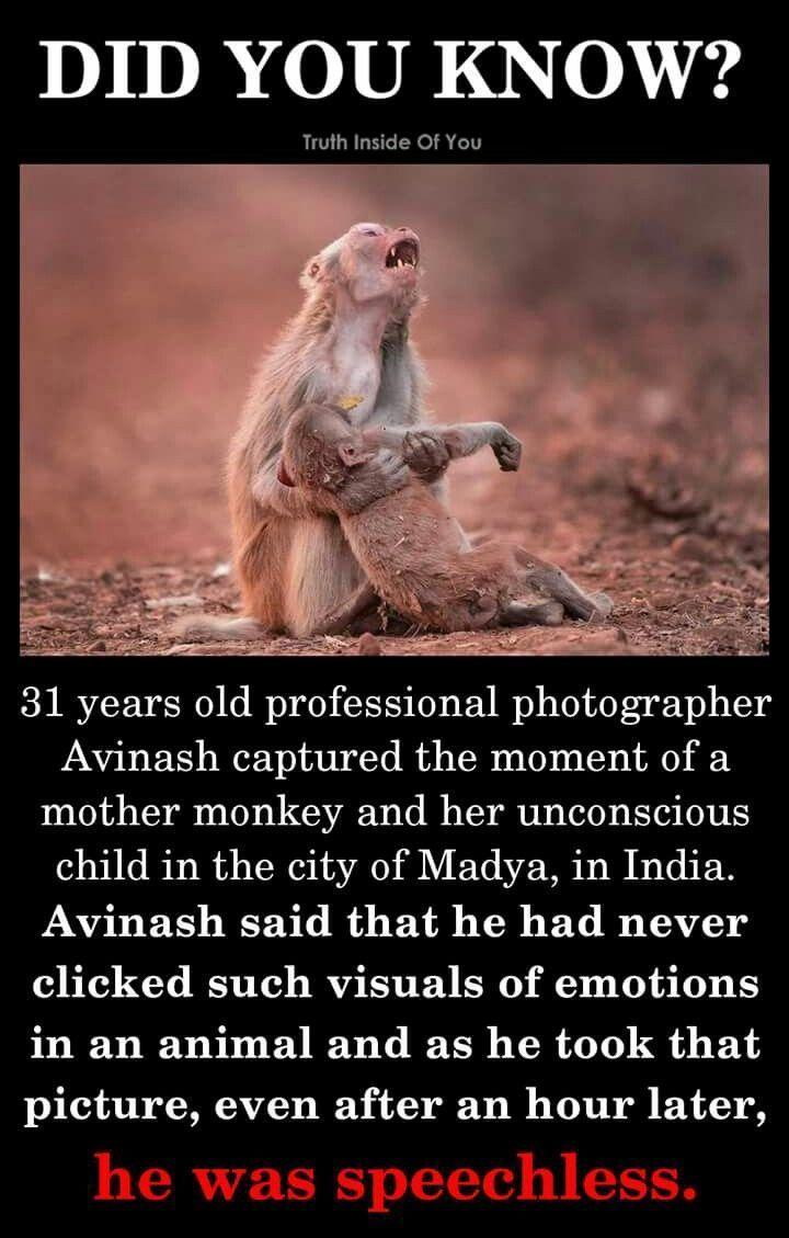 Photo of Wir alle wussten, dass Tiere Gefühle hatten. Wir glauben einfach, dass sie sie …