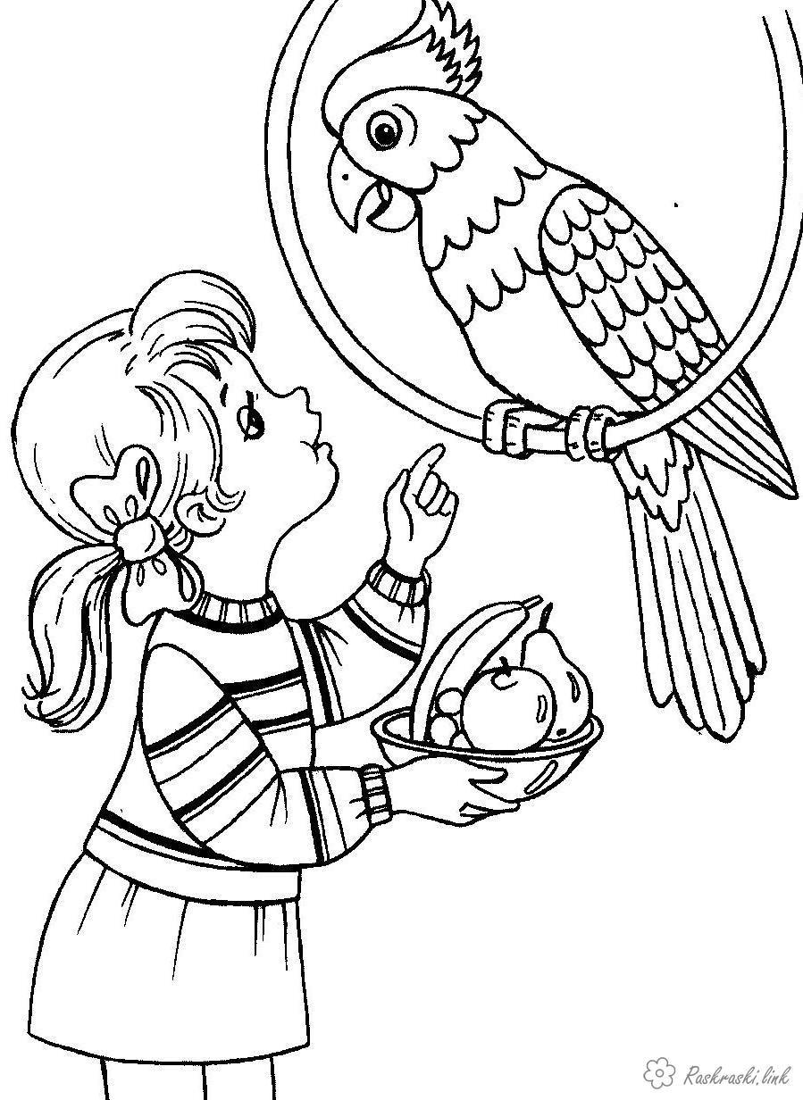 раскраски животное девочка и попугай кирке в сад