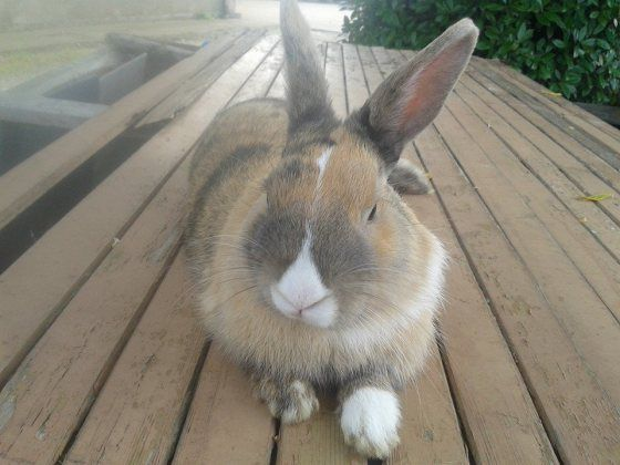 One of our rabbits