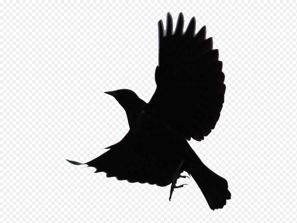 Black Bird Png Blackbird Png Transparent Png Mart 1848 1391 Png Download Free Transparent Background Black Bi Cartoon Clip Art Bird Silhouette Black Bird