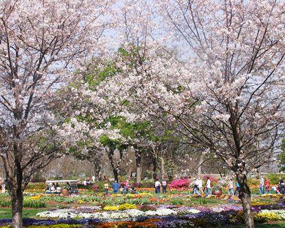 Dallas Arboretum   Perfect Spot For A Picnic!