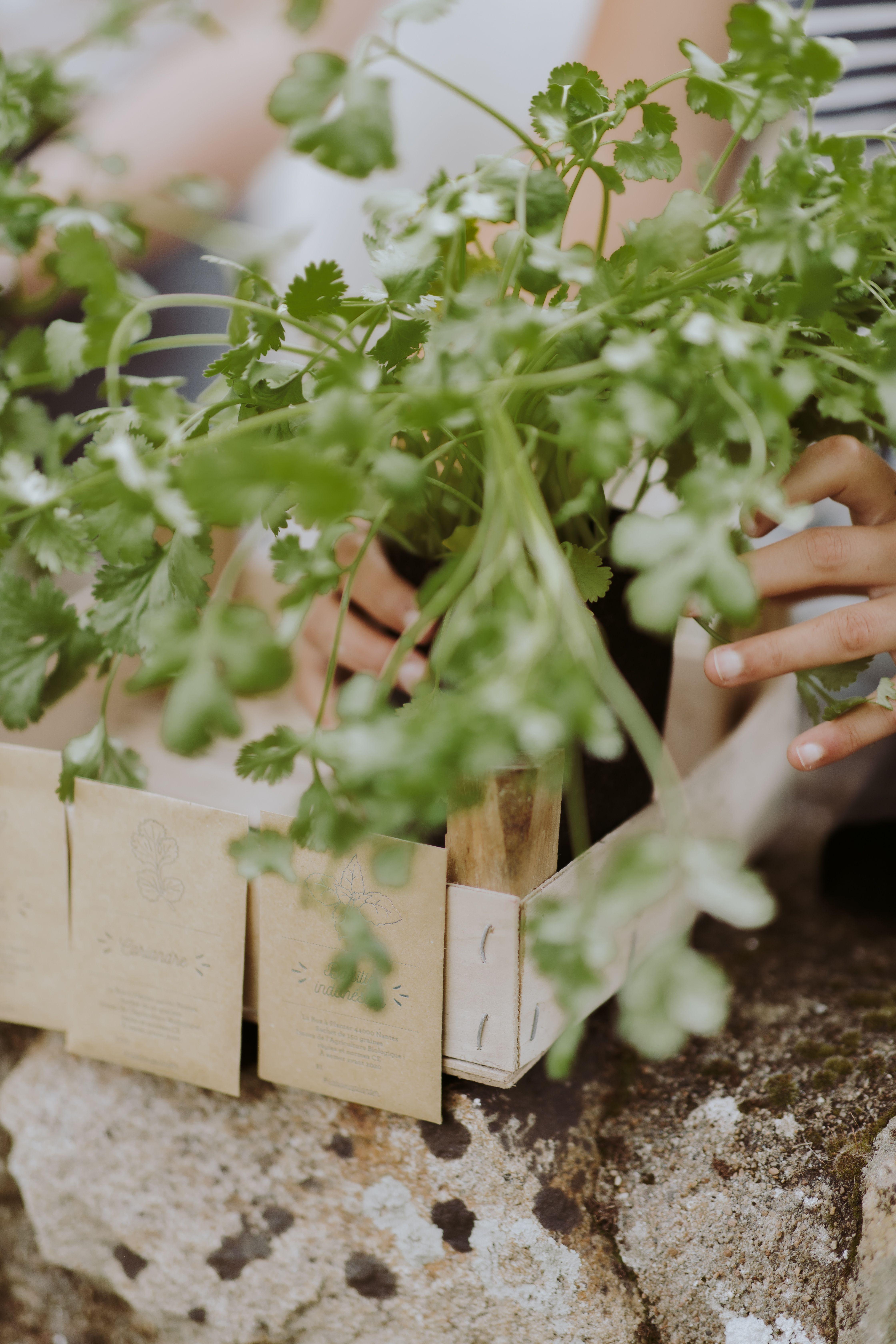 Coffret De 5 Plantes Aromatiques Petit Jardin D Aromates Avec