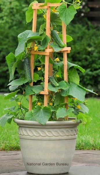 Photo of Container Gardening with Vegetables
