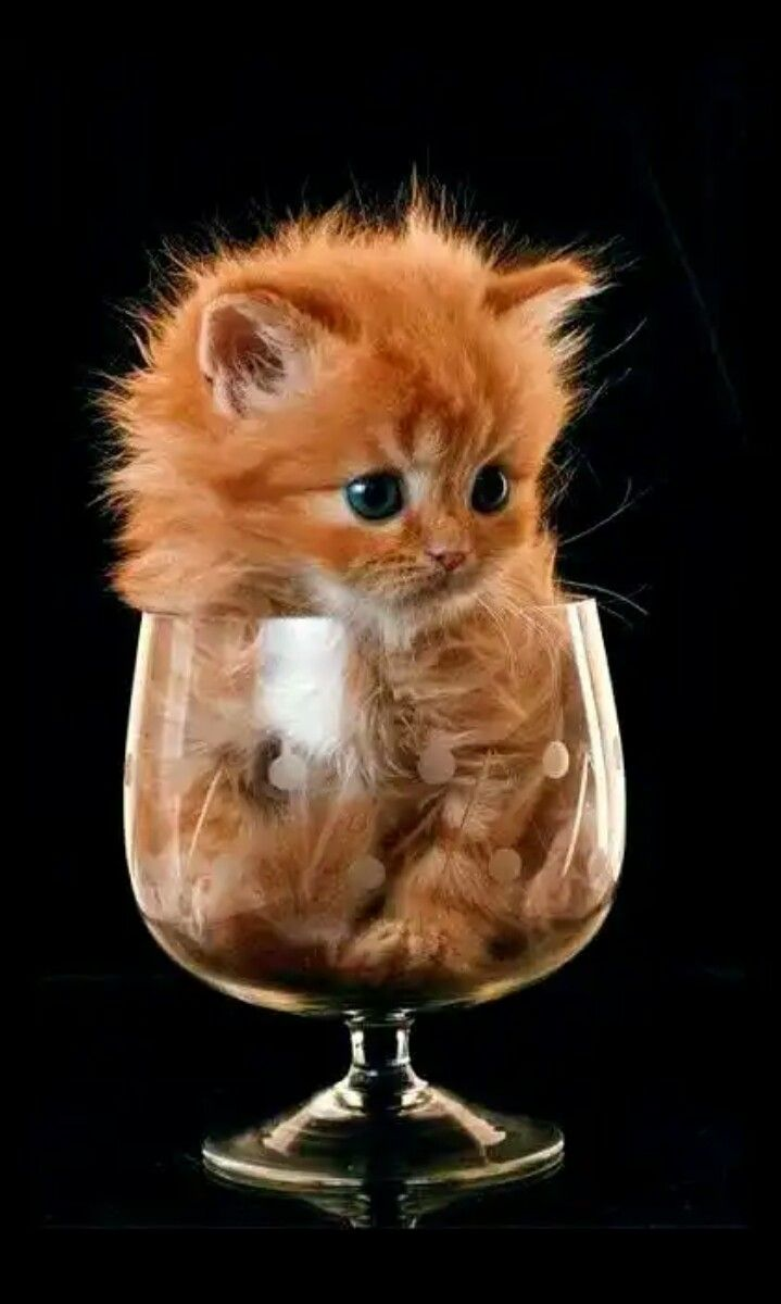 Would U Like Drink It As Fluid Or Liquid Or Rest Digest It And Restore It As Normal By Activation Of Parasimetatic Ner In 2020 Cute Animals Cute Cats Cute Baby Animals