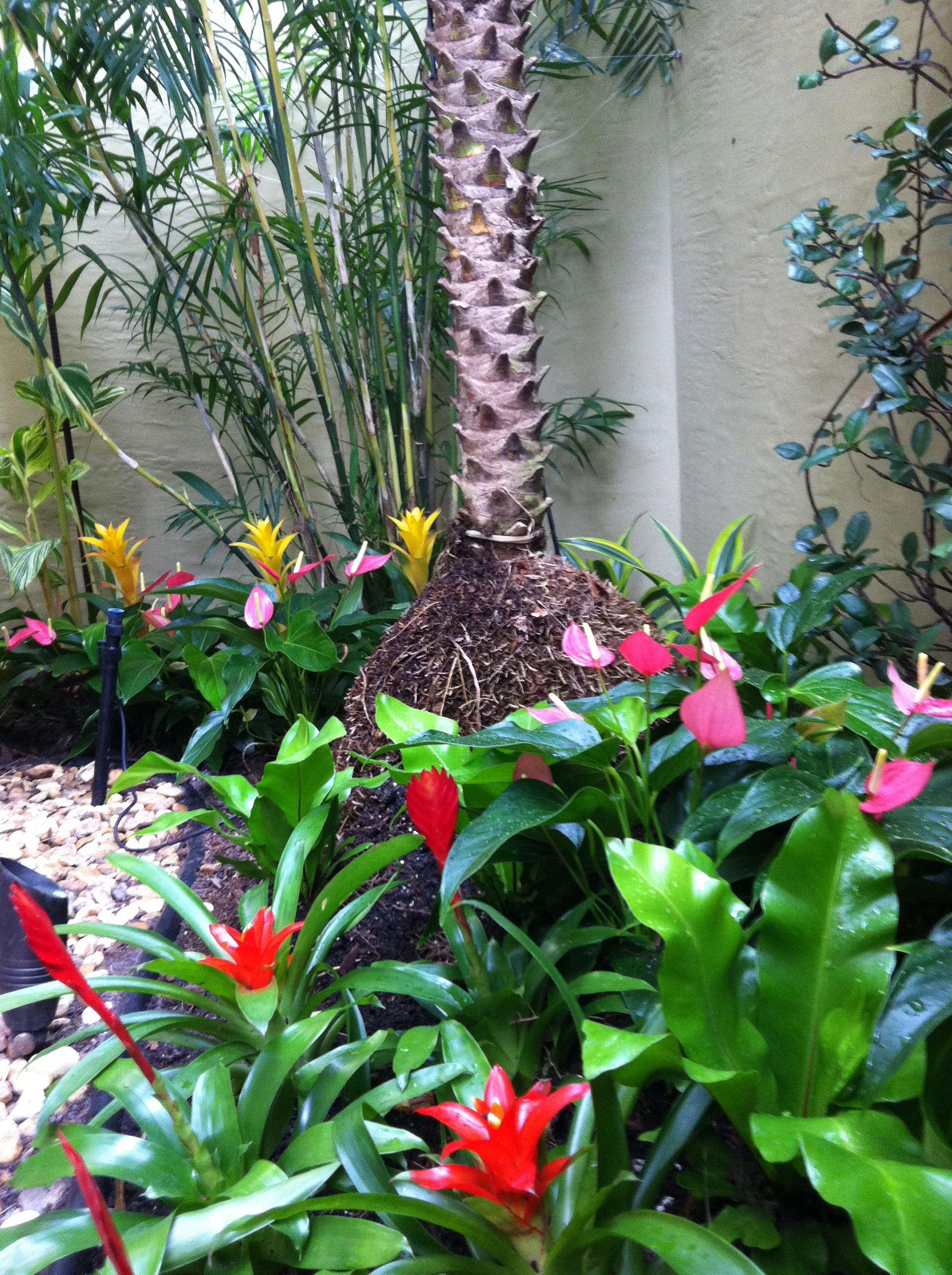 Bromeliad garden design | Landscape Designs | Pinterest ...