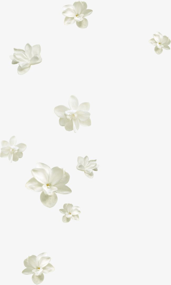 Pretty White Flowers Floating Floating Flowers Pretty Flowers White Flowers Png Transparent Clipart Image And Psd File For Free Download White Flower Png Floating Flowers Flower Aesthetic