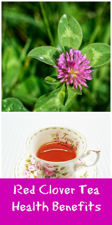 Red Clover Tea Bags Benefits Pinterest Herbal Remedies Health