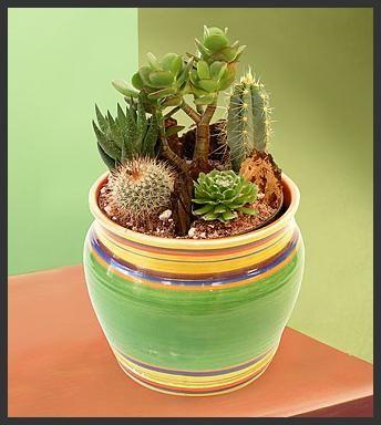 beautiful cactus ideas for your garden 2