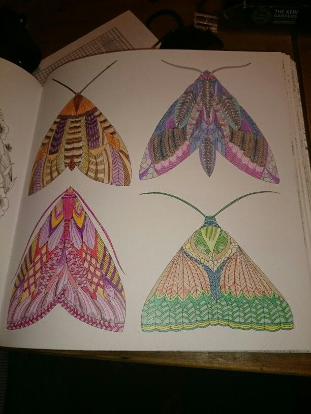 Millie Marotta Animal Kingdom Moths