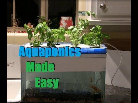 Cheapest and easiest aquaponics hydroponics setup ever for Indoor gardening for dummies