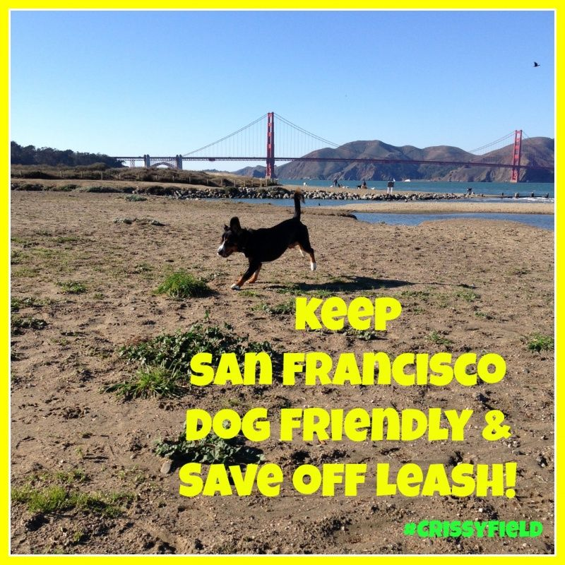 Help Save Off Leash In My Favourite Parks Fort Funston Crissy
