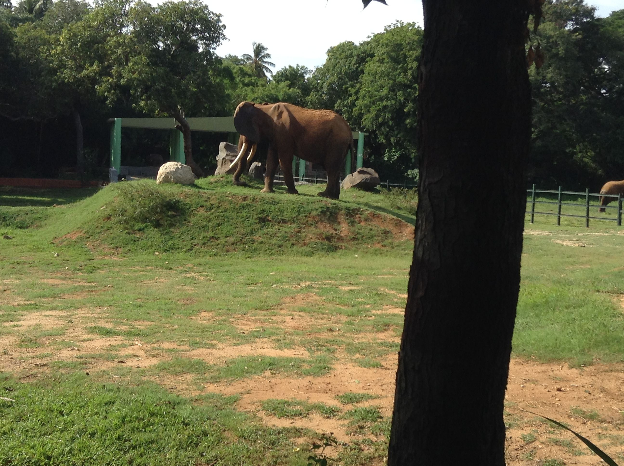 69d2ba1b84a72b8d0d1039e1efe44a39 - Mysore Zoo Sri Chamarajendra Zoological Gardens