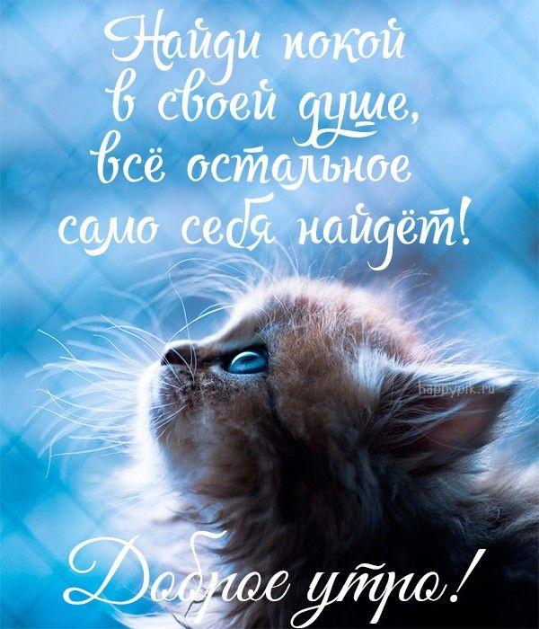 Dobroe Utro Prikolnye Kartinki 70 Novyh Kartinok S Dobrym Utrom