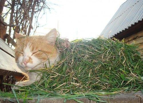 SniperSleeper Cat