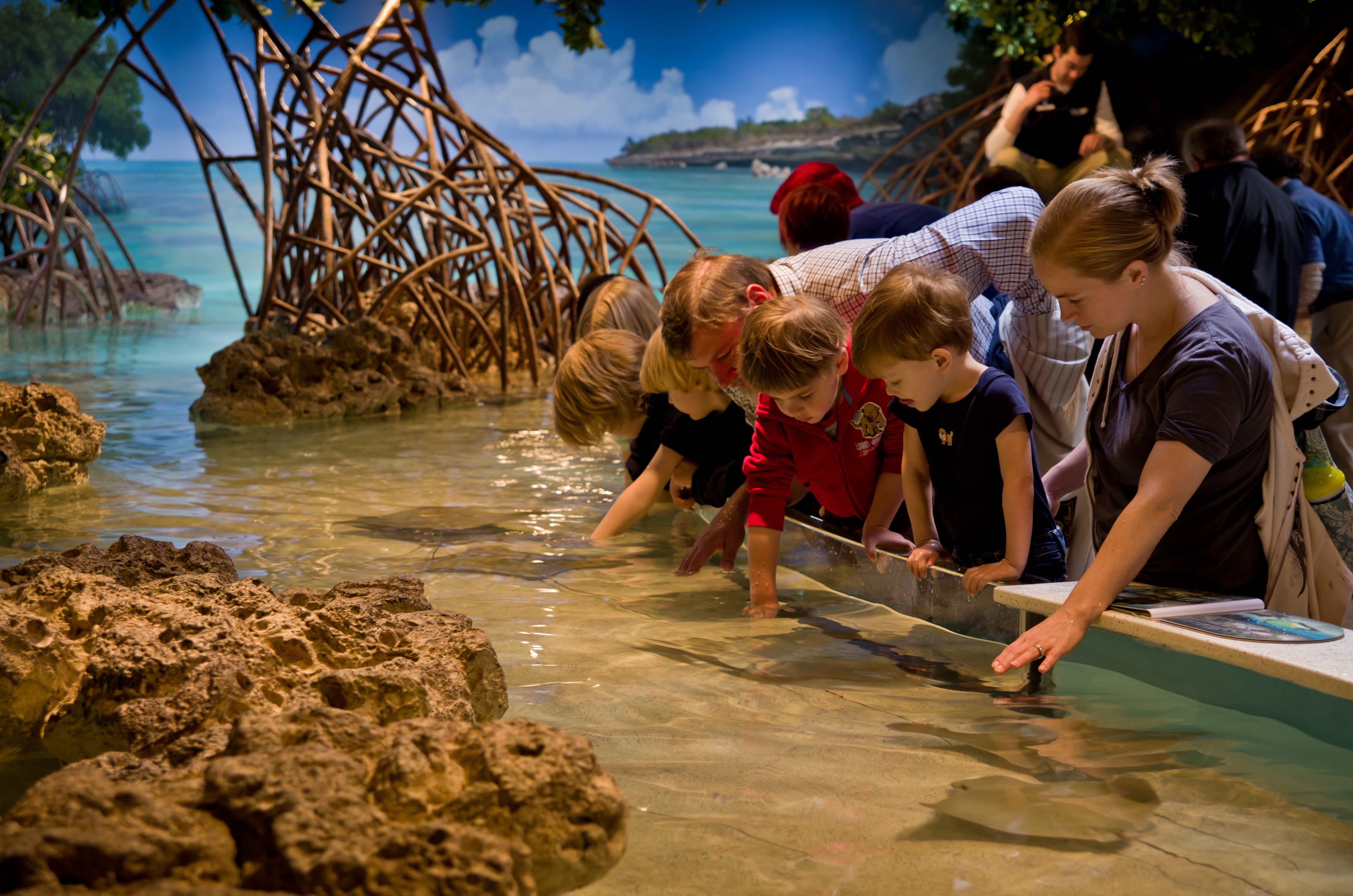 New england aquarium shark and ray touch tank the kids for Fish stores in ma