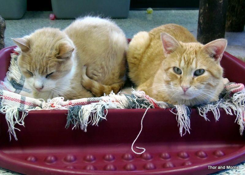 Cat Nap 3 Cat Nap Cats And Kittens Cats