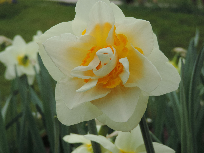 Types De Fleurs Et Leurs Noms Recherche Google My Secret Garden