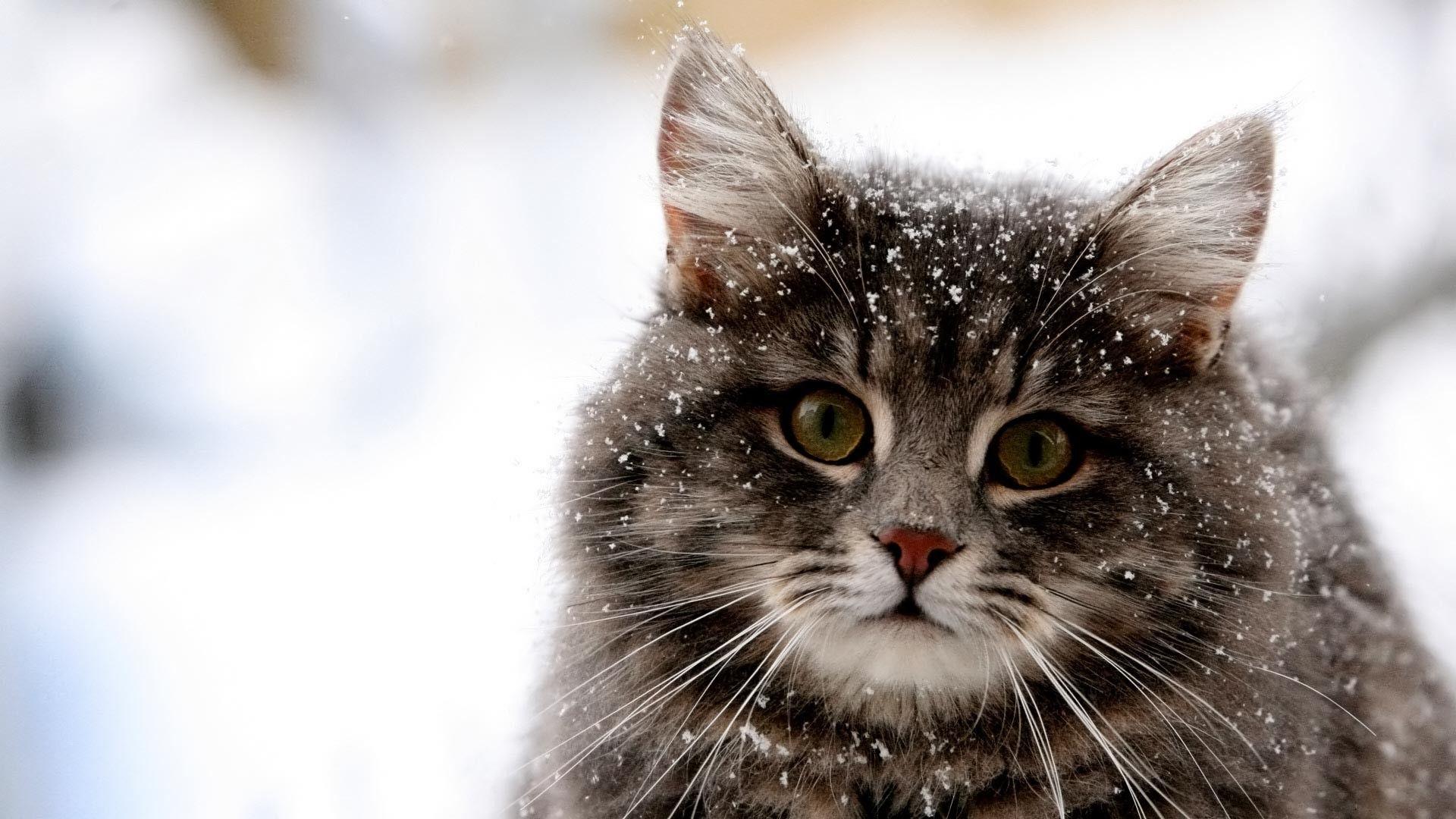 48 Cute Winter Animal Wallpaper Background Photos Hd Images Kucing Wallpaper Kucing Binatang
