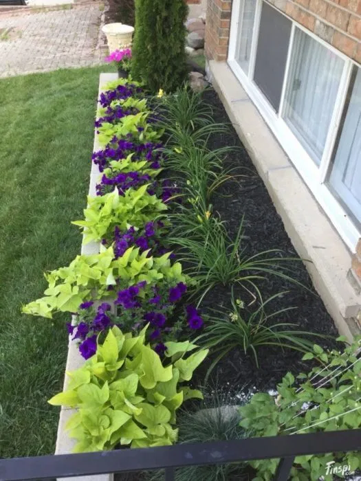 Photo of 20 wonderful original flower beds that will decorate any suburban area
