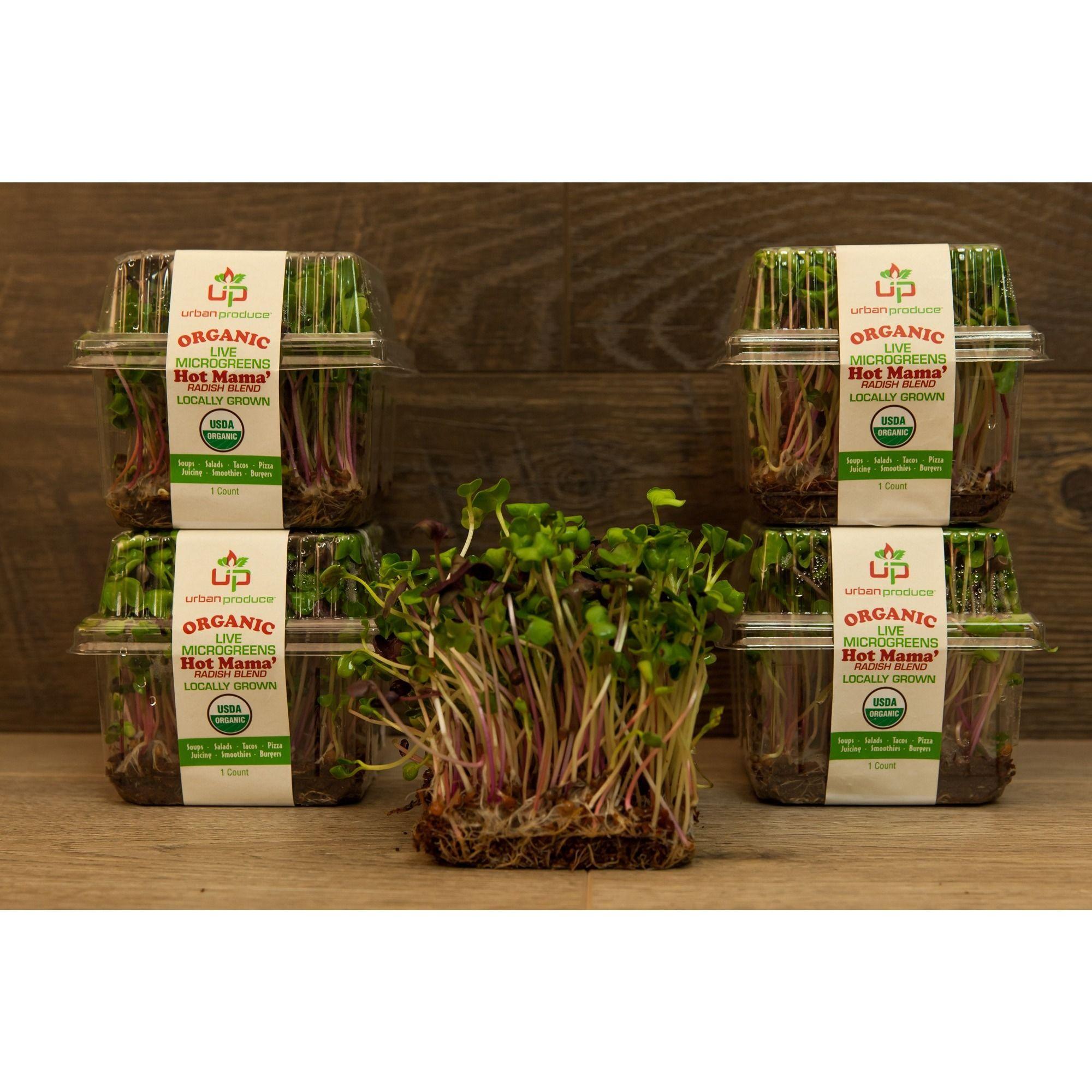 Urban Produce Certified Organic Living Hot Mama Microgreens