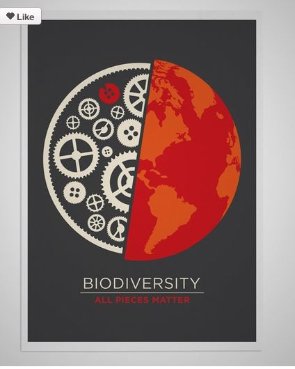 Biodiversity Does Not Seem Significant Until One Stops To Think