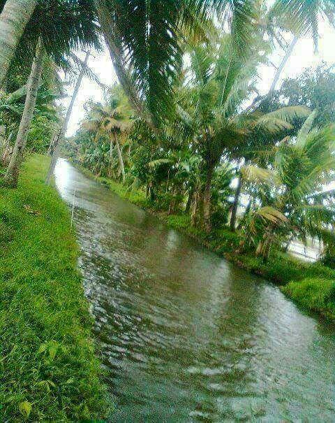 Beautiful Kerala Landscape Photography Nature Beautiful Landscape Wallpaper Kerala Travel