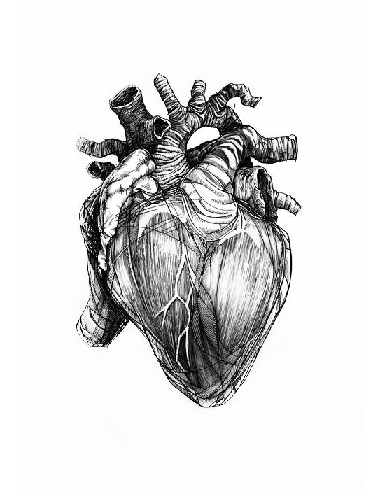 Monochromized Anatomy Art Heart Drawing Heart Art
