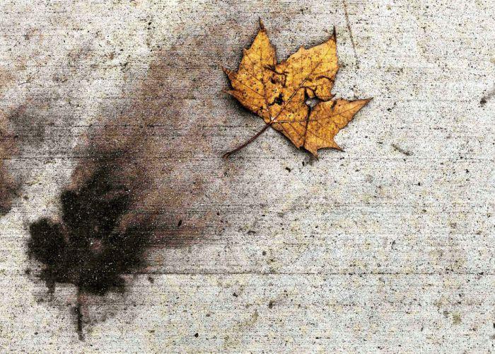 Syksyn värit saanut lehti jätti tumman jäljen newyorkilaiselle jalkakäytävälle Pelhamin kaupunginosassa.