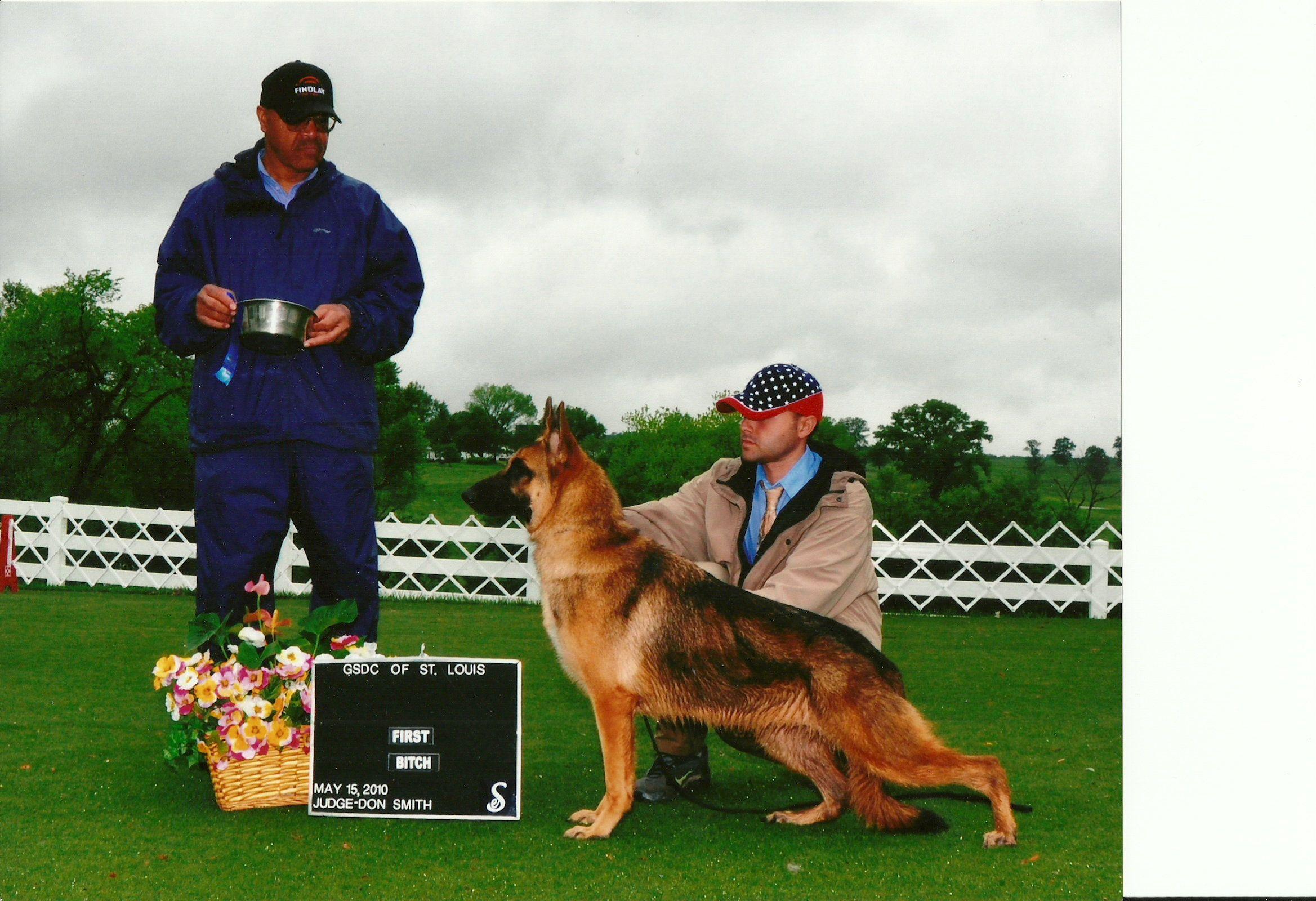 Autum winning dogs german shepherd movie posters